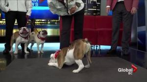 Super Dogs unleash their tricks on Global BC